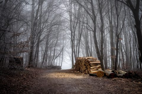 Foto: Wald