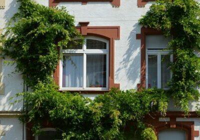 Foto: Fassadenbegrünung