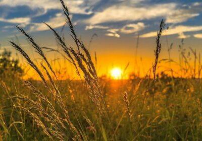 Foto: Landwirtschaft