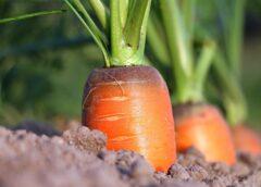 Foto: nachhaltig angebaute Lebensmittel