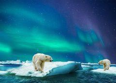 Foto: Eisbären in der Arktis bedroht