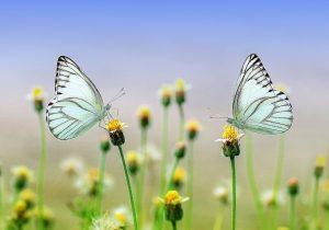 Schmetterling-1127666_1920_pixabay Ronny Overhate