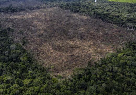 Foto: Abholzung im Regenwald - Foto: Cruppe, WWF UK