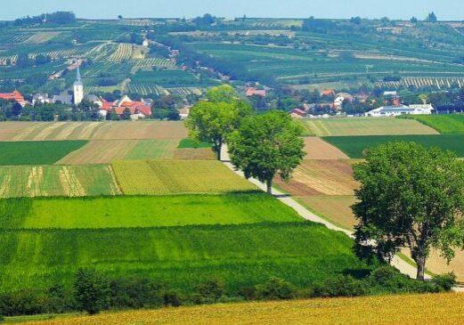 Foto: Niederösterreich, Weinviertel