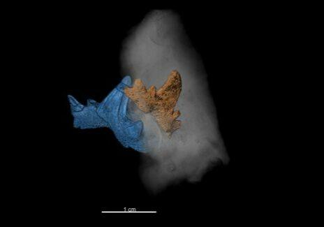 BILD zu OTS - 3D-Visualisierung der Hai-ZŠhne